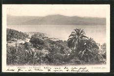 Ajaccio avenue des palmiers lacorsedantan (4)