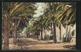 Ajaccio avenue du Premier Consul lacorsedantan.com - Copie (5)