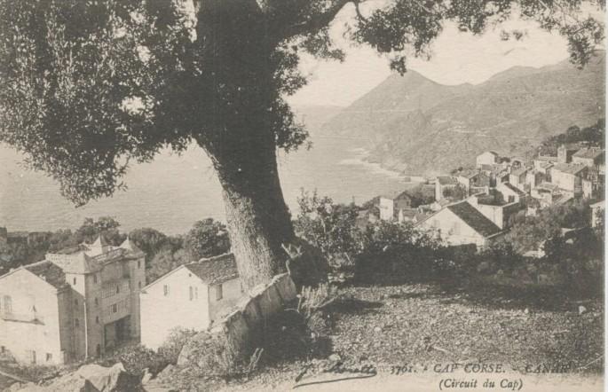 canari 2.jpg