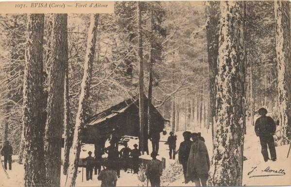 EVISA  Forêt d'Aitone.jpg