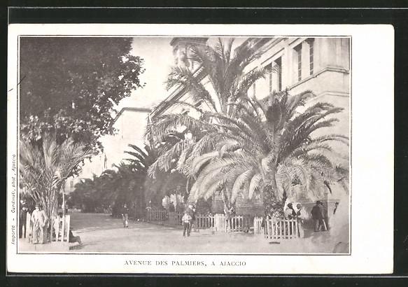 Avenue des palmiers a Ajaccio