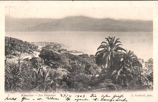 Ajaccio : les palmiers