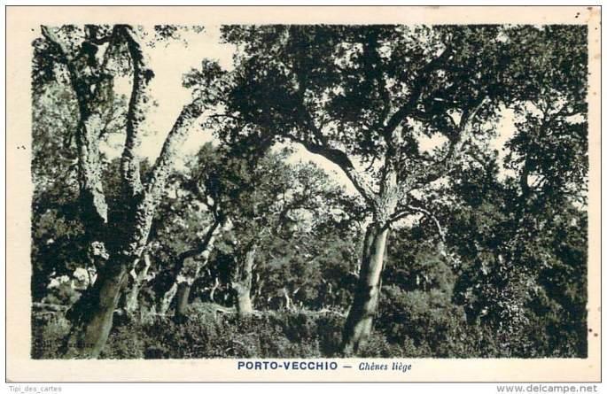porto-vecchio-chenes-liege.jpg